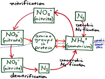 What Are Nitrogen Fixing Bacteria >> Bacteriology 102 The Enrichment And Isolation Experiments