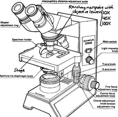 Labelled diagram of microscope optics binoculars 102 microscope review splammo ccuart Images